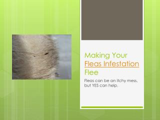 Making Your Fleas Infestation Flee