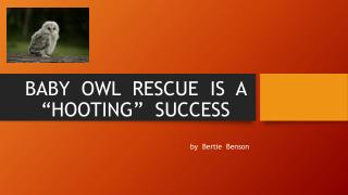 """BABY  OWL  RESCUE  IS  A  """"HOOTING""""  SUCCESS"""