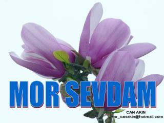 MOR SEVDAM