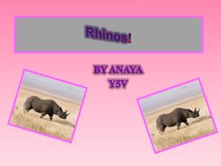 Rhinos !