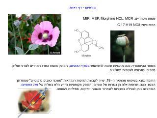מורפיום - דף ראיות שמות מסחריים:  MIR, MSP, Morphine HCL, MCR הרכז כימי:  C 17 H19 NO3