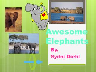 Awesome Elephants
