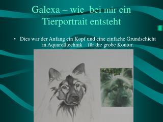 Galexa – wie  bei  mir  ein Tierportrait entsteht