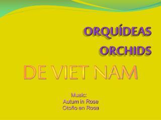 ORQUÍDEAS ORCHIDS