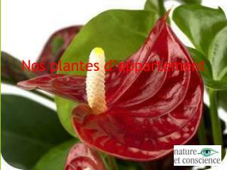 Nos plantes d�appartement