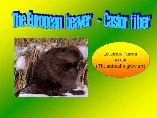 """""""castrare"""" mean to cut (The animal's graw art)"""
