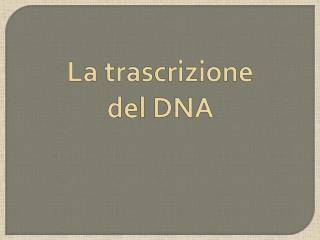La trascrizione del DNA