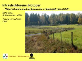 Infrastrukturens biotoper  -  Något att räkna med för bevarande av biologisk mångfald?