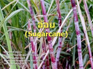 อ้อย (Sugarcane)