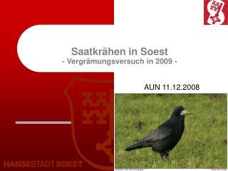 Saatkr�hen in Soest - Vergr�mungsversuch in 2009 -