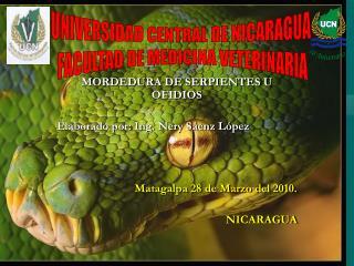 MORDEDURA DE SERPIENTES U OFIDIOS Elaborado por: Ing. Nery Sáenz López
