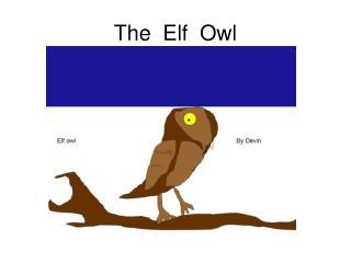 The  Elf  Owl