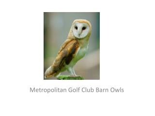 Metropolitan Golf Club Barn Owls