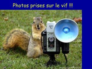 Photos prises sur le vif !!!