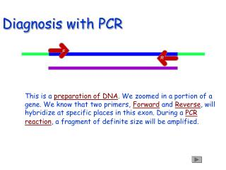 Diagnosis with PCR