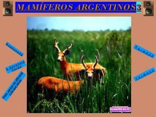MAMÍFEROS ARGENTINOS