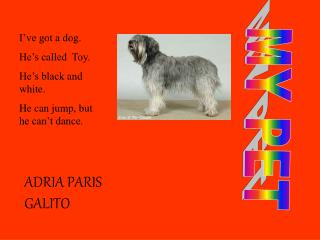 I�ve got a dog. He�s called  Toy. He�s black and white.  He can jump, but he can�t dance.