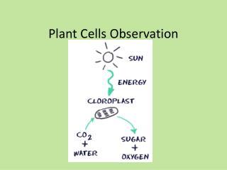 Plant Cells Observation