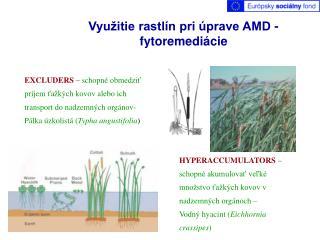 Využitie rastlín pri úprave AMD - fytoremediácie