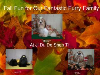 Fall Fun for Our Fantastic Furry Family