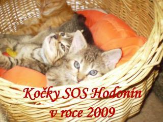 Kočky SOS Hodonín v roce 2009