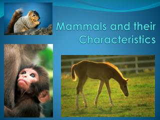 Mammals and their Characteristics