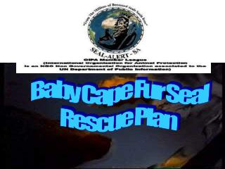 Baby Cape Fur Seal Rescue Plan
