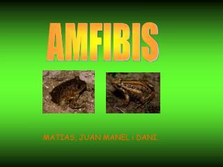 AMFIBIS