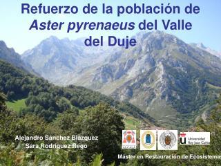 Refuerzo de la población de  Aster pyrenaeus  del Valle del Duje