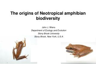 The origins of Neotropical amphibian biodiversity