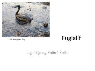 Olíu mengaður fugl                          Fuglalíf