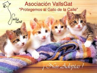 """Asociación  VallsGat """"Protegemos  al  Gato  de la  Calle """""""