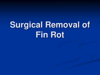 Surgical Removal of Fin Rot