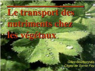 Le transport des nutriments chez les végétaux