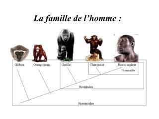 La famille de l�homme :
