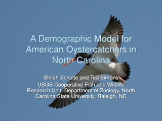 A Demographic Model for American Oystercatchers in North Carolina