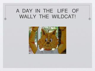 A  DAY  IN  THE   LIFE   OF WALLY  THE  WILDCAT!