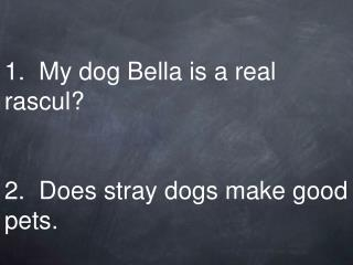 1.  My dog Bella is a real rascul? 2.  Does stray dogs make good pets.