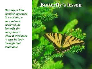 Butterfly's lesson