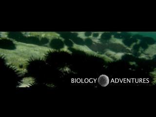 BIOLOGY       ADVENTURES