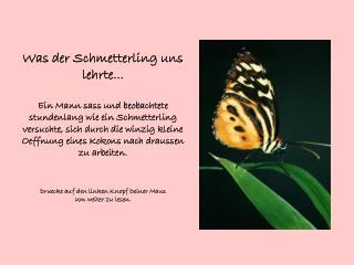 Was der Schmetterling uns lehrte...