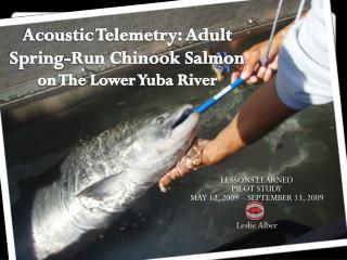Acoustic Telemetry: Adult Spring-Run Chinook Salmon  on The Lower Yuba River
