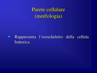 Parete cellulare (morfologia)