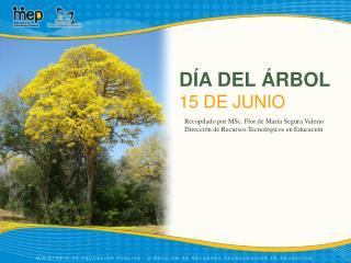 DÍA DEL ÁRBOL 15 DE JUNIO