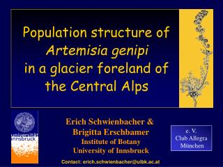 Population structure of  Artemisia genipi  in a glacier foreland of the Central Alps