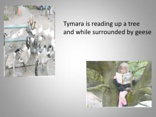 Tymara  is reading up a tree  and while surrounded by geese