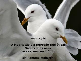 MEDITAÇÃO A Meditação e a Devoção Iniciáticas São as duas asas  para se voar ao infinito.