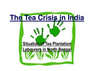 The Tea Crisis in India