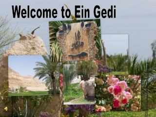 Welcome to Ein Gedi