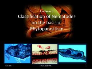 Lecture 5 Classification of Nematodes  on the basis of  Phytoparasitism